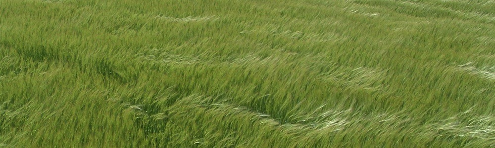 Scotland-Arbrouth-grass-header