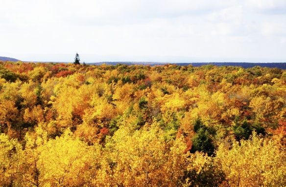 autumn-western-pa2