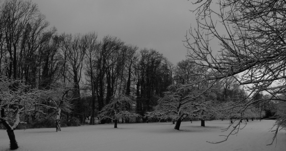 winter-snow-trees-bw